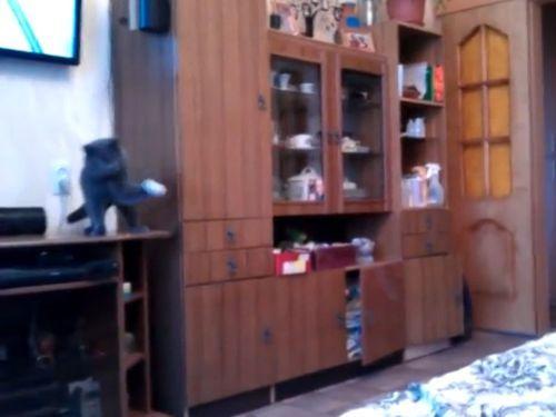 ピンポン玉と猫01
