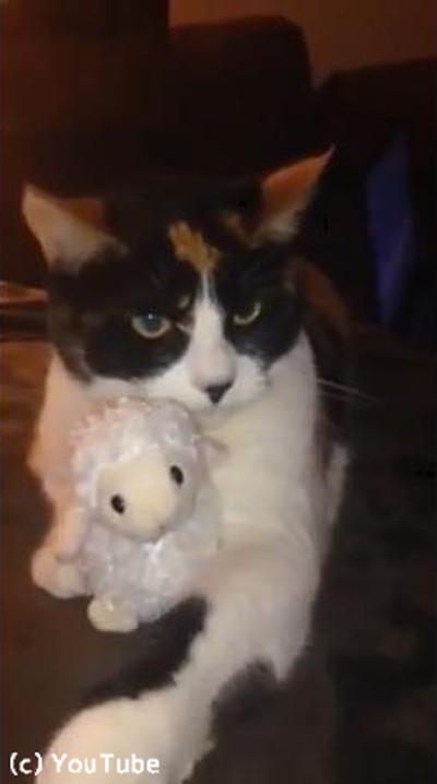 「あげません!」鋭い目つきでぬいぐるみを守る猫様02