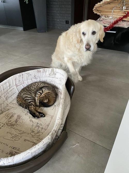 猫にベッドを奪われた犬たち05