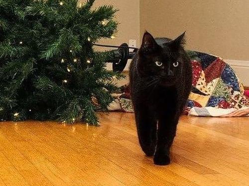 クリスマスと猫02