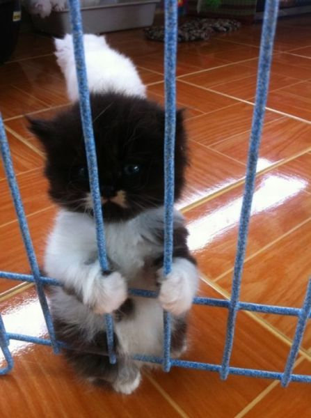 おいしそうな脚の女子校生 233脚目猫ガイジ隔離スレ [無断転載禁止]©bbspink.com->画像>4743枚