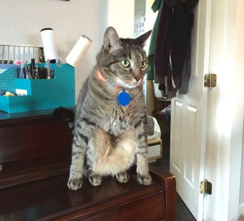 うちの猫…座り方がおかしいんだよ05