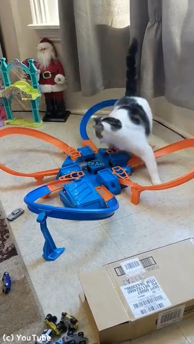 おもちゃに夢中な猫02