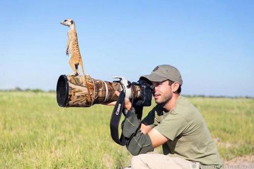 カメラマンな動物04