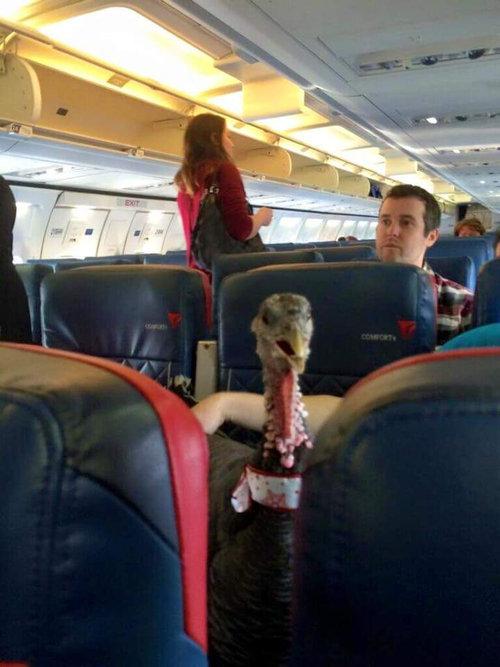 セラピーペットが飛行機に乗っている01