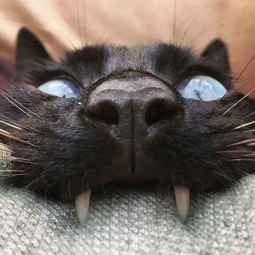 猫に襲われる人々05