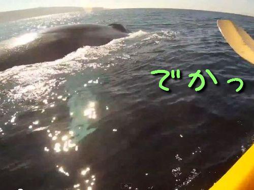 カヤックの隣にクジラ