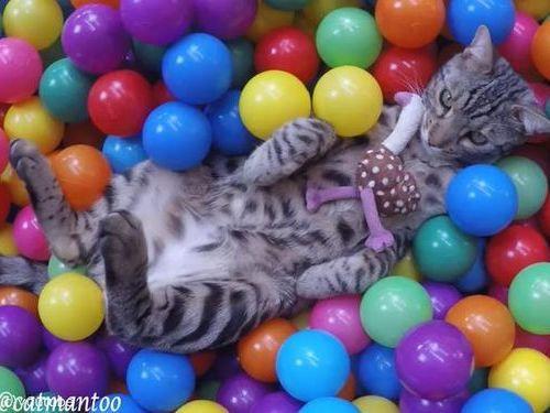 カラーボールと猫00