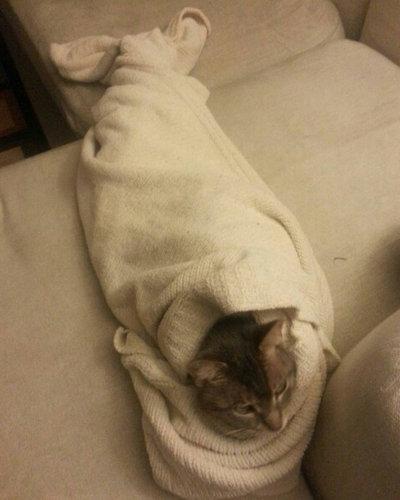 人魚猫09