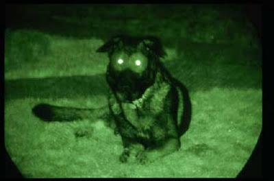 暗視ゴーグル犬01