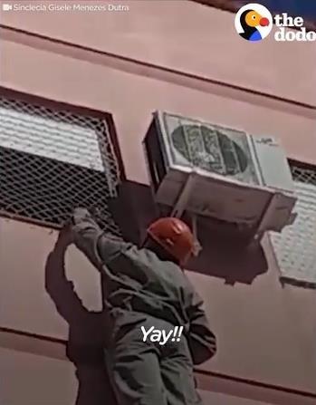 ビル4階で動けなくなった猫を救出04