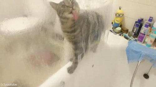シャワーねこ02