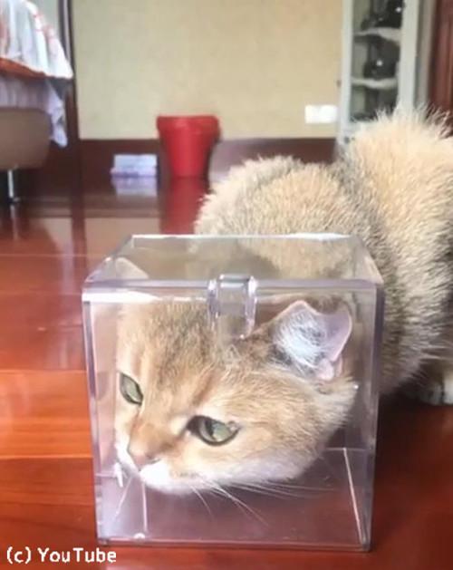 お鼻に蝶々がとまって困惑する猫01