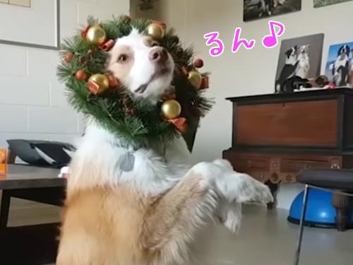 クリスマスが待ちきれない犬00