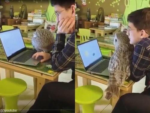 フクロウが空飛ぶ猫と呼ばれる理由00