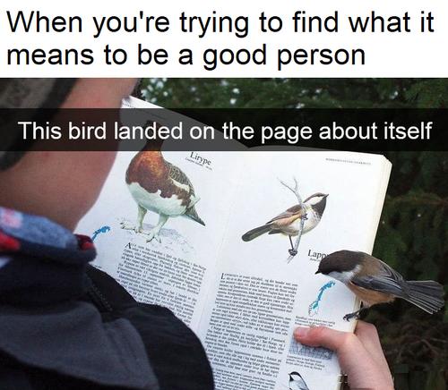 自分のページに止まった鳥01
