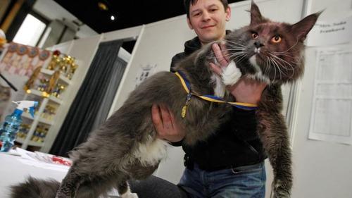 ウクライナのでっかい猫コンテスト03