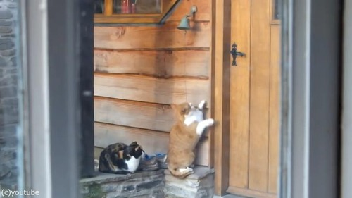 猫「ごはんくださいニャ—」02