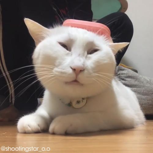 うちの猫のブラッシング03