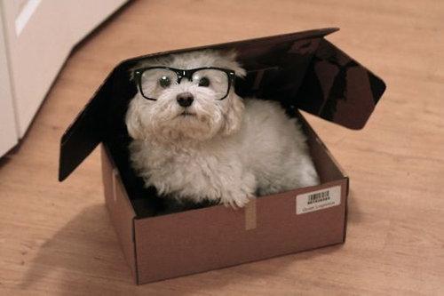 箱好きの犬06
