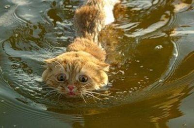泳ぐ猫08