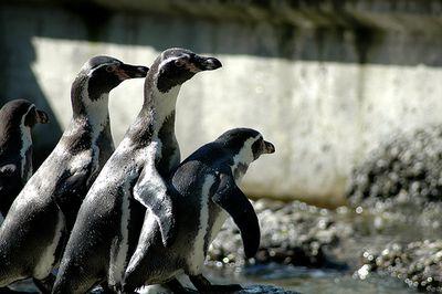 ペンギン18