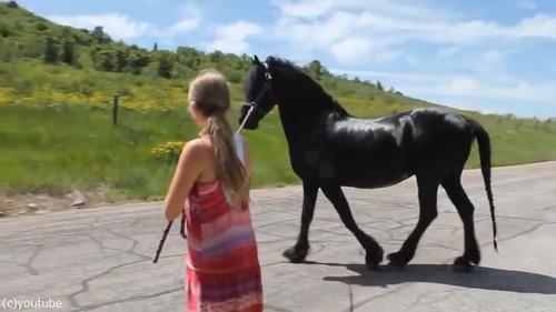 馬の彫像が気になる本物の馬01