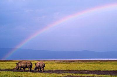 美しいアフリカ02