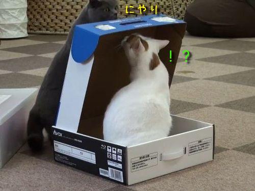 黒猫と白猫