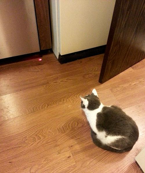 食洗機と猫01