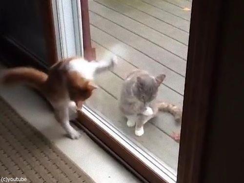 ハイテンションの猫と冷静な猫01