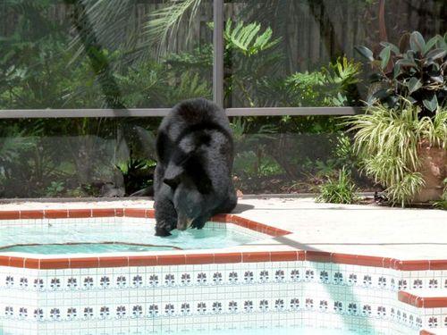 プールに動物17