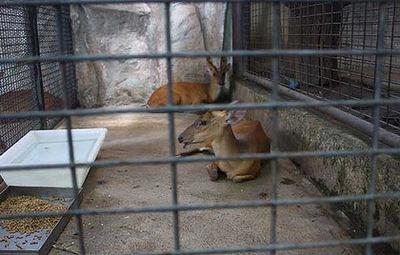 タイの動物園03