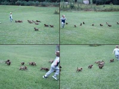 子犬の群れに追われる