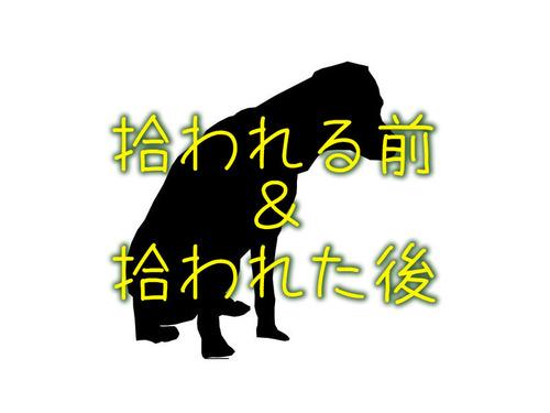 犬のビフォー・アフター00