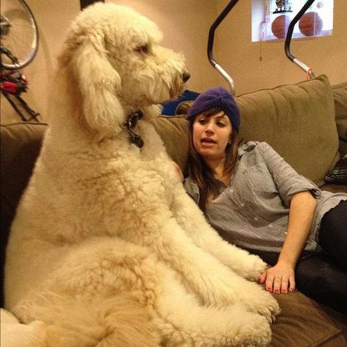 犬を巨大化する写真テクニック03