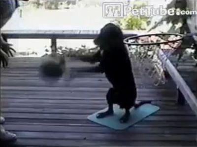 バスケのドリブルが上手な犬