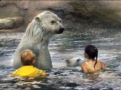シロクマと泳ぐ00