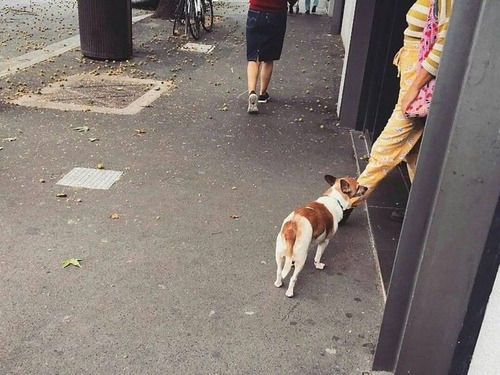 飼い主を待つ犬たち03