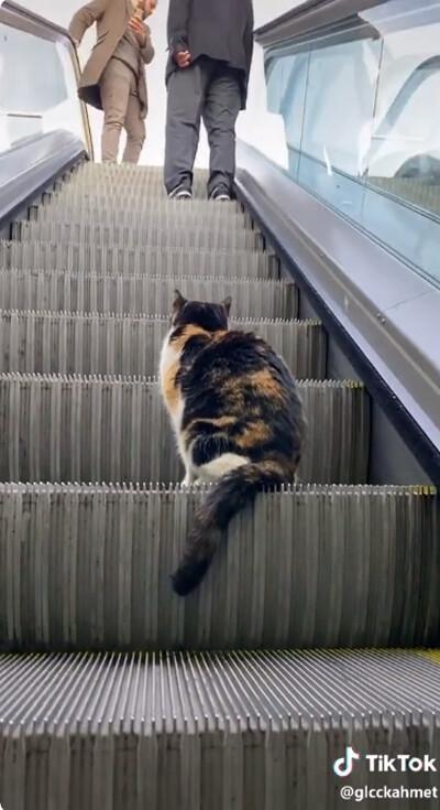 猫、エスカレーターを乗りこなす03