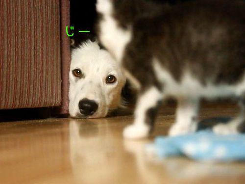 子猫を見守る犬たち00