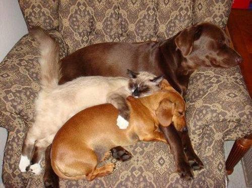 犬の寝相13