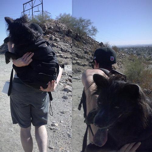 うちの犬は腰が悪いのにハイキングが大好き09