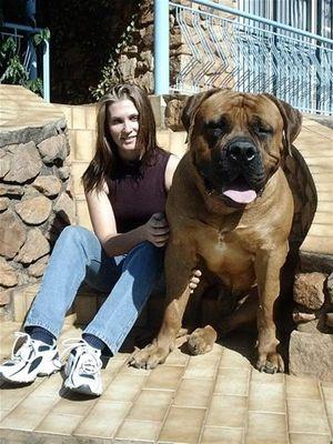 巨大な犬06