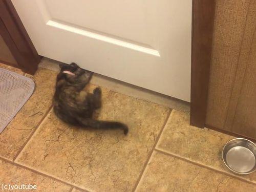 子猫がドアの下を通り抜ける02