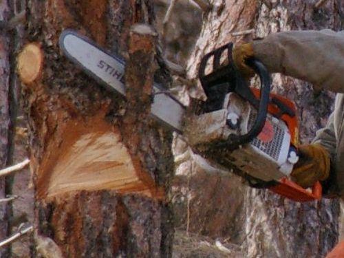 木を切ったらとんでも00