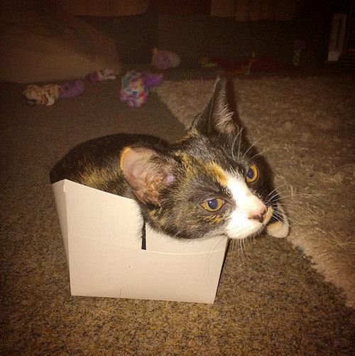 箱入り猫01