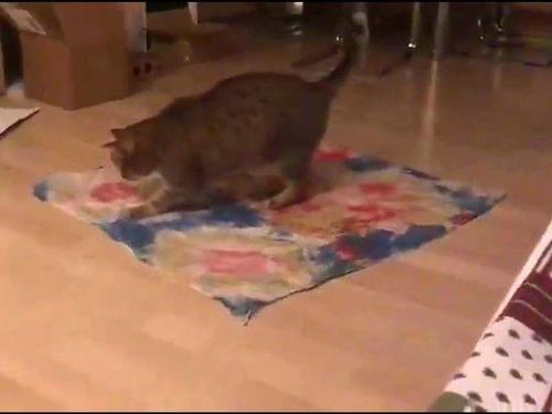 不思議な猫の行動01
