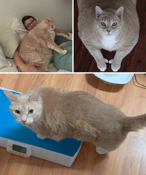 ダイエットに成功した猫たち02