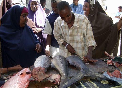 ソマリアの魚釣り17